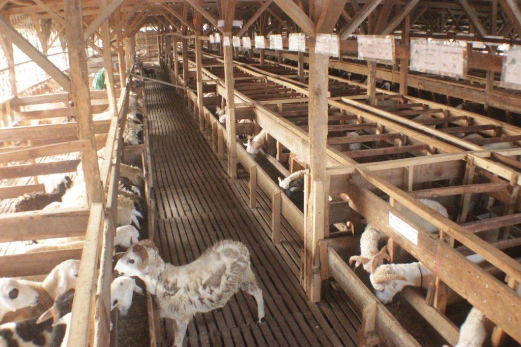 Pelatihan Ternak kambing bogor