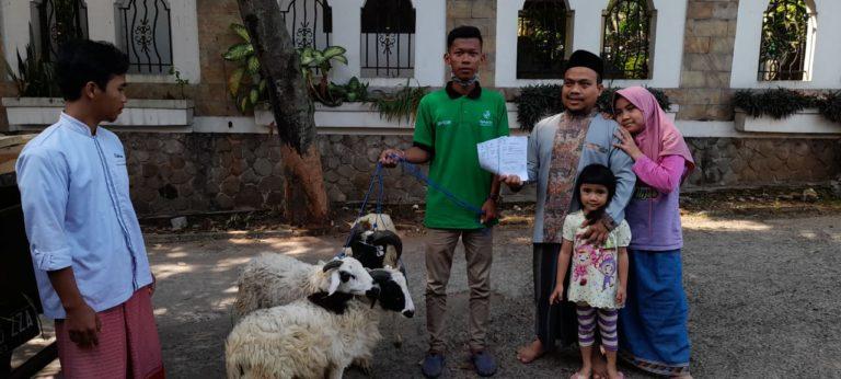 Jual Kambing Qurban Jakarta